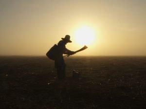 Os direitos e benefícios previdenciários do trabalhador rural